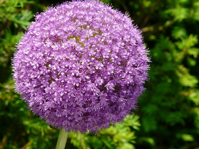 flower-109952_640